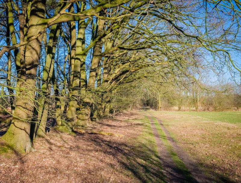 Paysage néerlandais de Buurserzand près de Haaksbergen en mars Twente, Overijssel, Pays-Bas image libre de droits