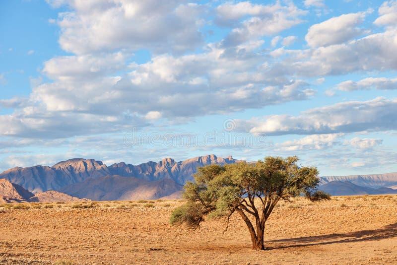 Paysage namibien avec l'arbre photographie stock libre de droits