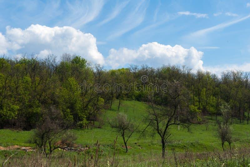 Paysage naturel avec les arbres, le pré, la forêt et les nuages blancs sur le ciel bleu Arbre dans le domaine photo stock