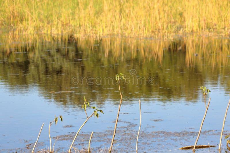 Paysage naturel d'étang image stock