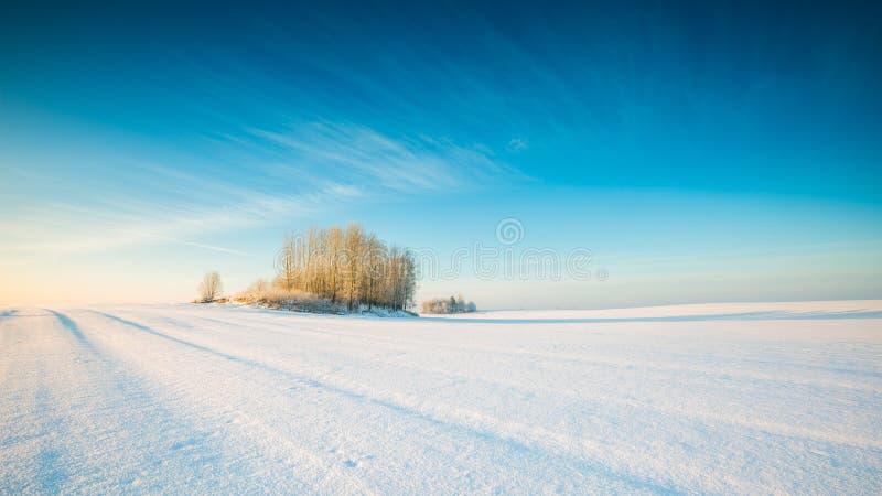 Paysage neigeux de champ d'hiver photo libre de droits