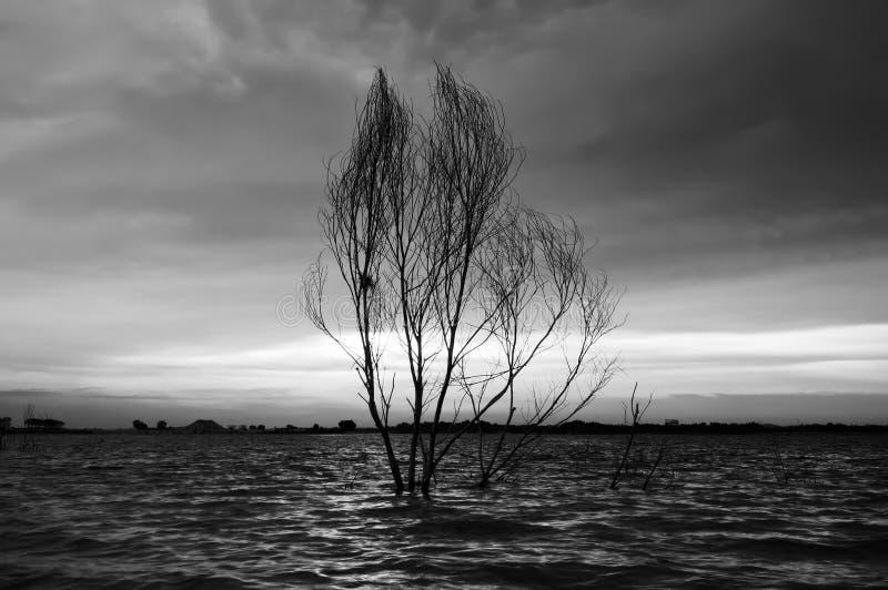 Paysage noir et blanc images libres de droits