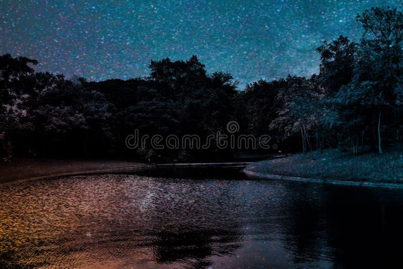 Paysage noir et blanc coloré de forêt d'usine de fleurs et d'arbre de belle texture de résumé sur l'étoile polaire d'obscurité et photo stock