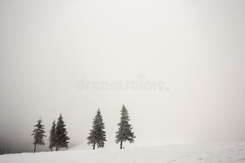 Paysage noir et blanc de Noël de nouvelle année de montagne d'hiver Rangée des sapins foncés couverts de gel dans la neige claire photographie stock