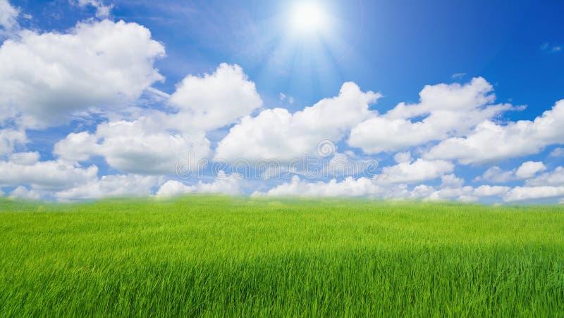 Paysage nuageux de nuage de ciel bleu d'herbe verte de gisement de riz photo stock