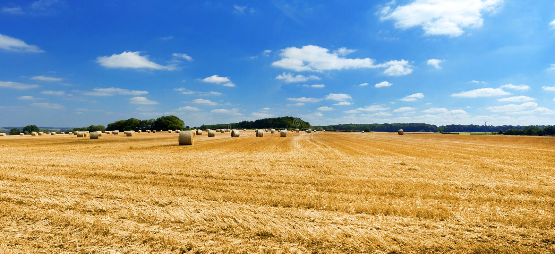Paysage paisible avec les champs et le ciel de seigle photo libre de droits