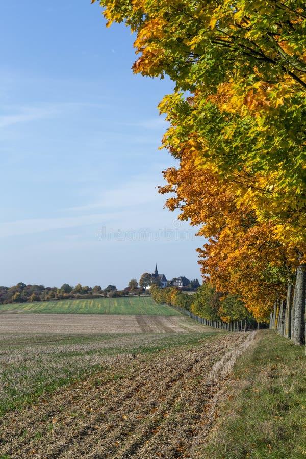 Paysage panoramique avec l'allée, les champs et la forêt photos stock