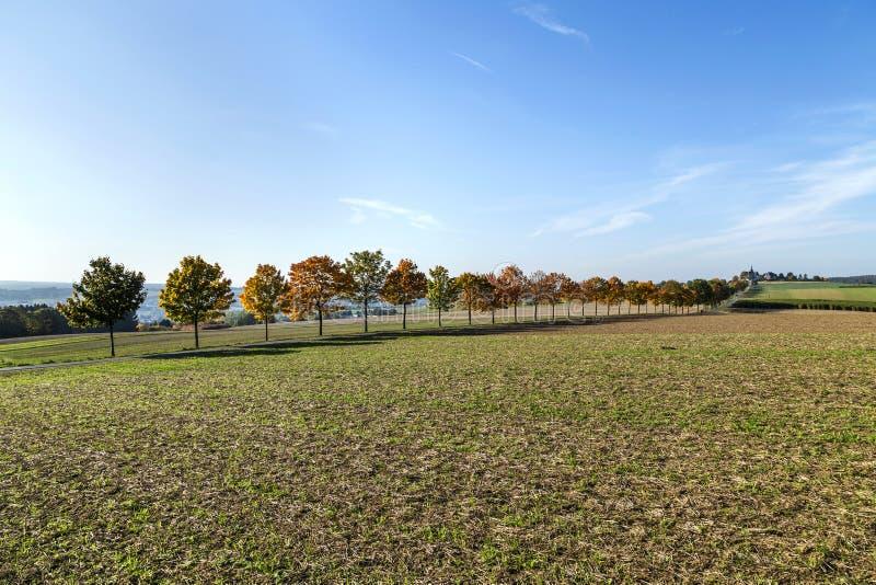 Paysage panoramique avec l'allée, les champs et la forêt images stock