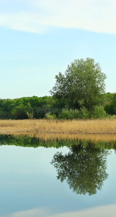 Paysage pittoresque de nature de l'Ukraine centrale, Poltava photo libre de droits
