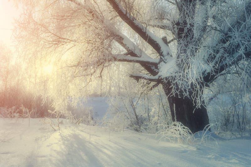 Paysage pittoresque du pays des merveilles d'hiver dans le matin froid d'hiver avec le soleil mou d'hiver image stock