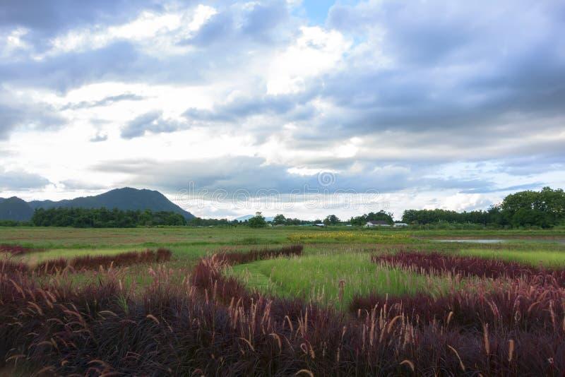 Paysage rouge d'herbe près de rivière de Mekok photo stock