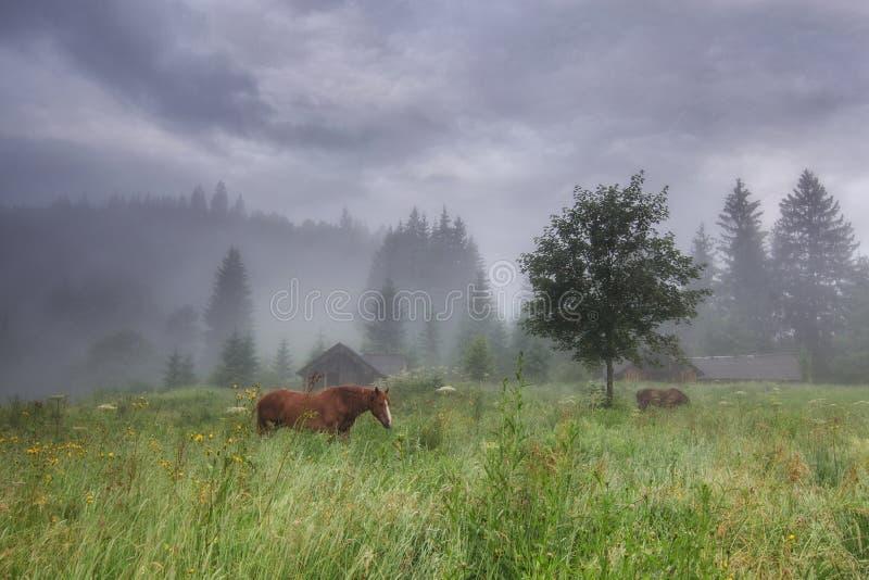 Paysage rural avec des chevaux images stock