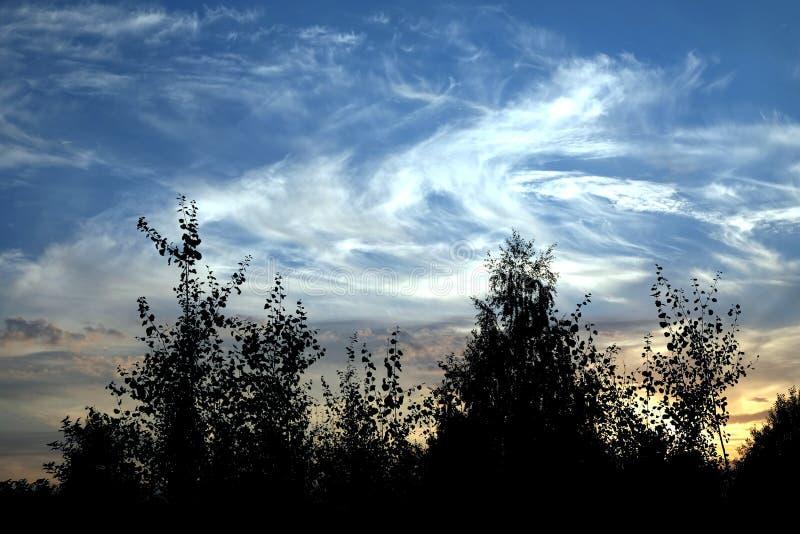 Paysage rural avec des silhouettes des arbres immobiles au coucher du soleil coloré bariolé au crépuscule images stock