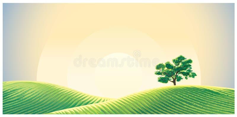 Paysage rural avec les champs semés illustration stock