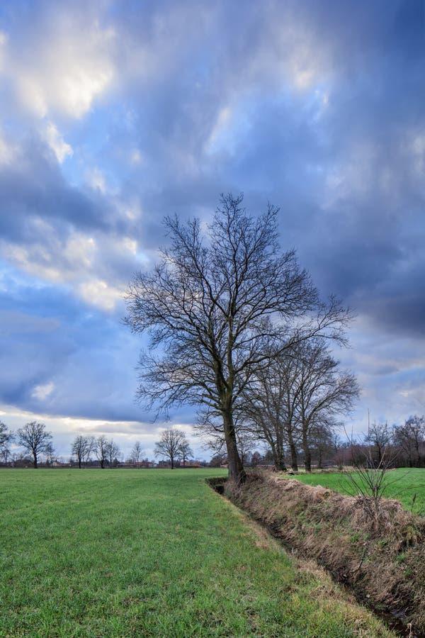 Paysage rural, champ avec des arbres près d'un fossé avec les nuages dramatiques au crépuscule, Weelde, Flandre, Belgique photo stock