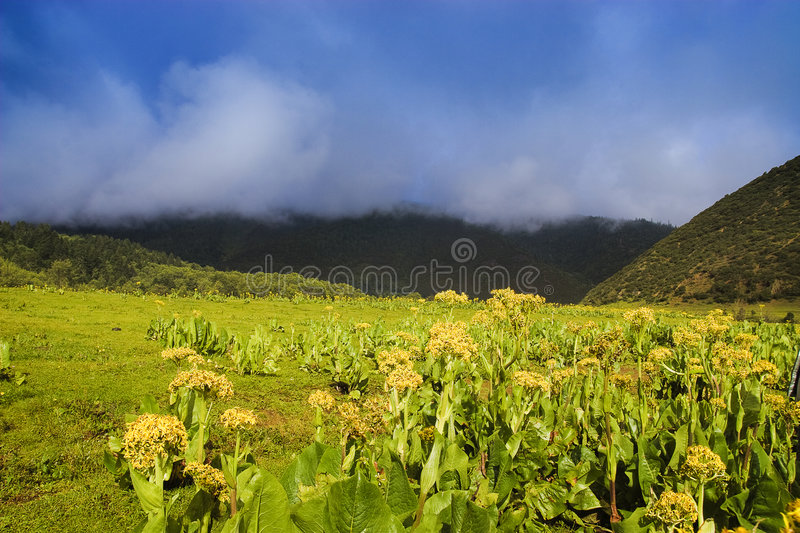 Paysage rural chinois images stock
