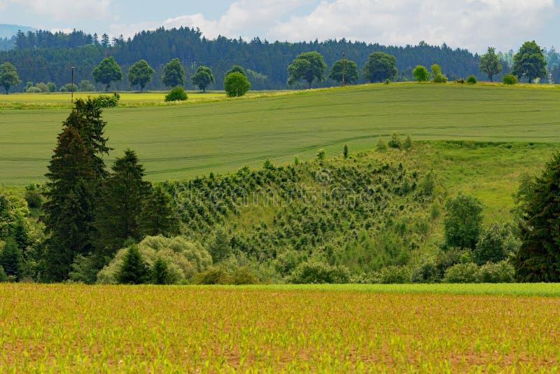 Paysage rural d'été d'été photo stock