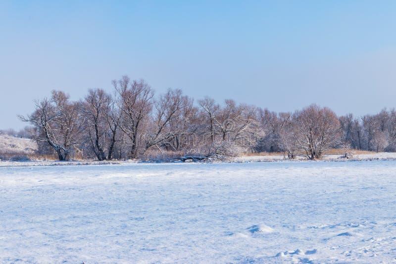 Paysage rural d'hiver avec le pré et les arbres neigeux images stock
