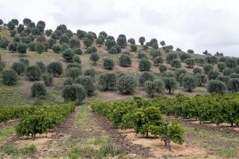 Paysage rural dans la région de la Calabre de l'Italie photographie stock libre de droits