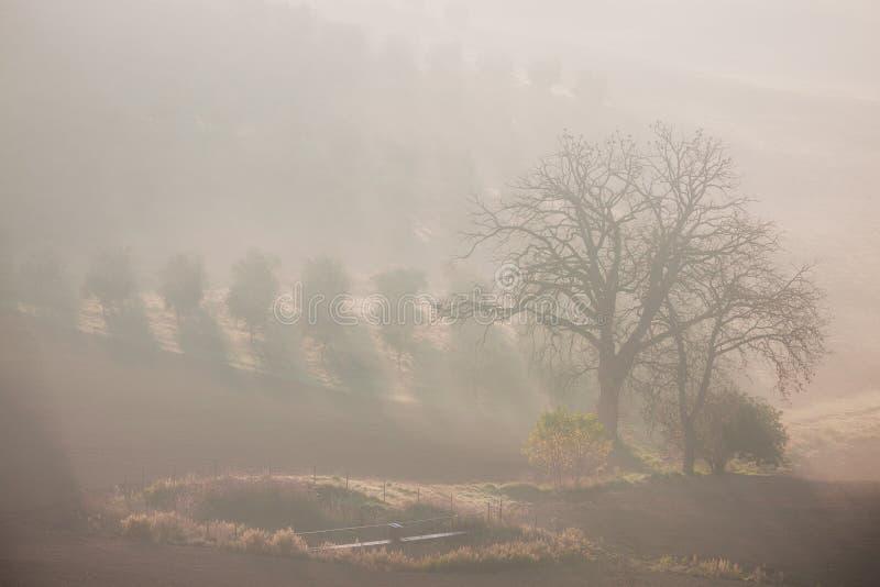 Paysage rural de campagne au matin de ressort images stock