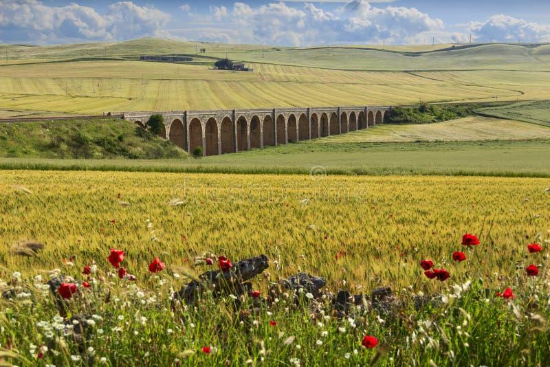 Paysage rural de ressort : pont de chemin de fer sur le champ de blé vert Pouilles l'Italie photo libre de droits