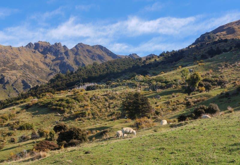 Paysage rural du Nouvelle-Zélande images stock
