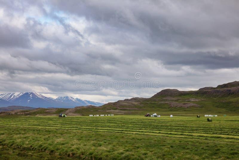 Paysage rural islandais avec le tracteur moissonnant le foin dans un domaine Islande Scandinavie photo libre de droits