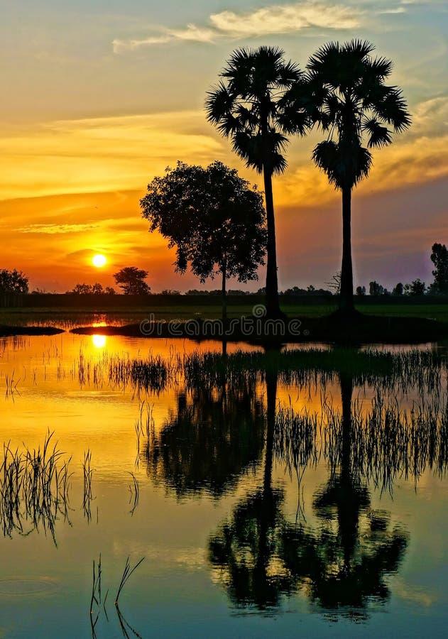 Paysage rural merveilleux de lever de soleil du Vietnam photographie stock libre de droits