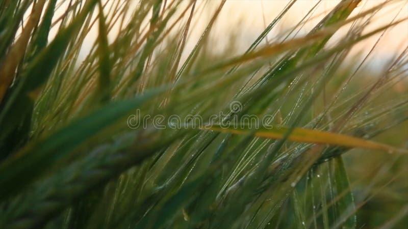 Paysage rural sous la lumière du soleil brillante Oreilles de maturation de fond de champ de blé de pré Concept riche de récolte  images stock