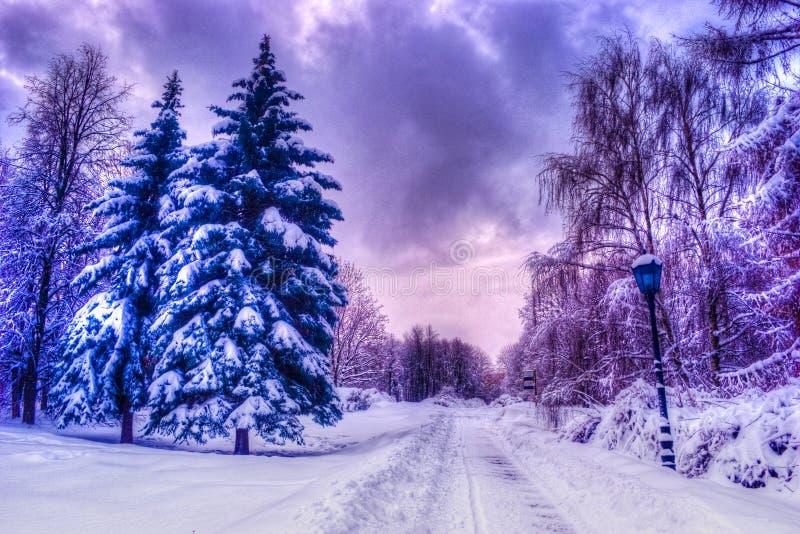 Paysage, sapin et pins d'hiver de Noël couverts dans la neige photos libres de droits