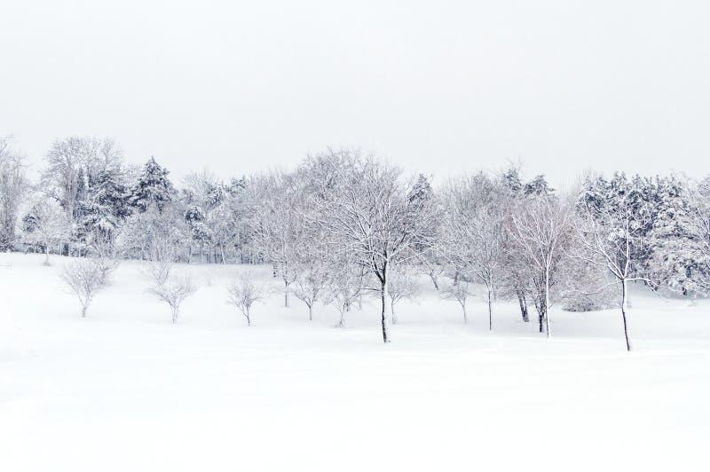Paysage sauvage après une tempête de neige photo libre de droits