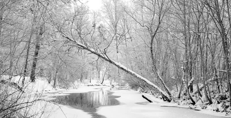Paysage sauvage de rivière de forêt d'hiver images libres de droits