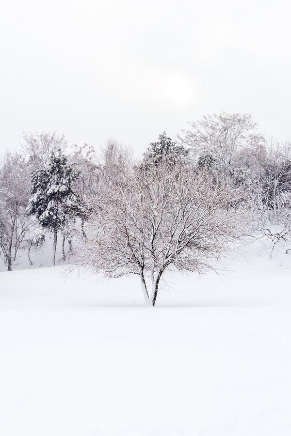 Paysage sauvage en hiver photos stock