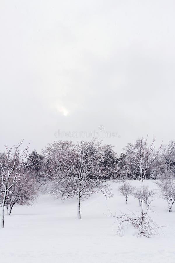 Paysage sauvage en hiver photographie stock libre de droits