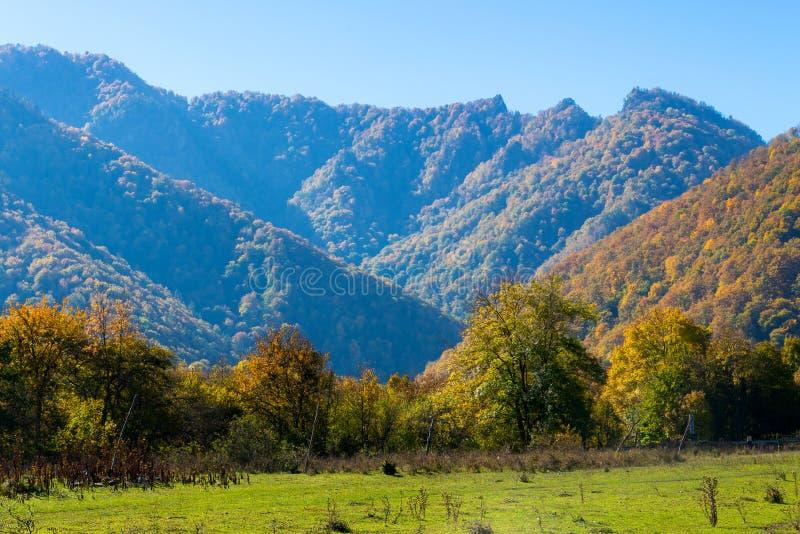 Paysage scénique avec des arbres dans la forêt de montagne en automne photos stock
