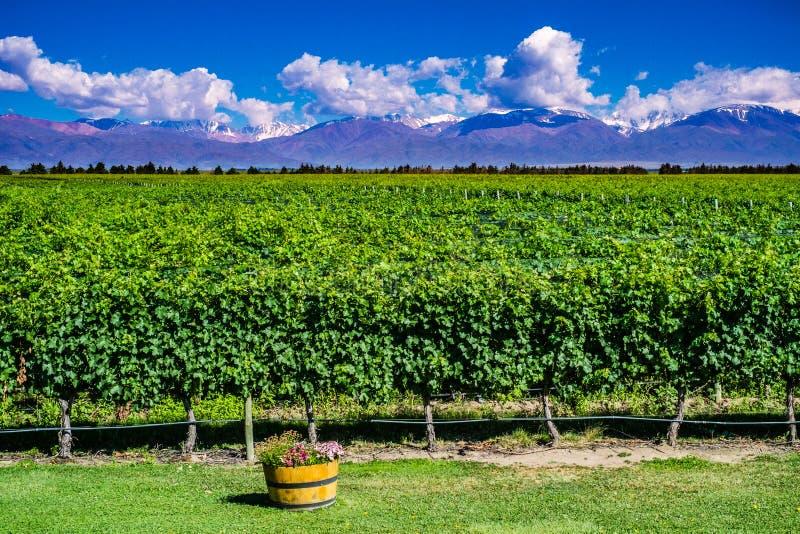 Paysage scénique avec des montagnes des Andes avec la neige et le vignoble dessus photo libre de droits