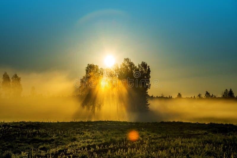 Paysage scénique d'aube avec la brume et le soleil photo stock
