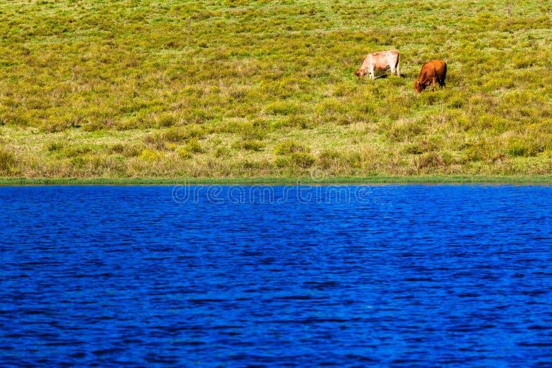 Paysage scénique de barrage de lac cattle deux image libre de droits
