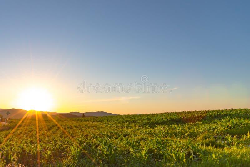 Paysage scénique de coucher du soleil de campagne avec une vue simple d'horizon de champ d'herbe sauvage et une forêt images stock