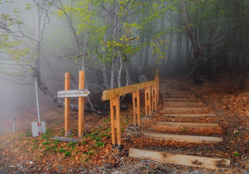 Paysage scénique de forêt brumeuse de montagne au ressort Chemin de disparaition d'escalier menant par des arbres dans le bois ve photo stock