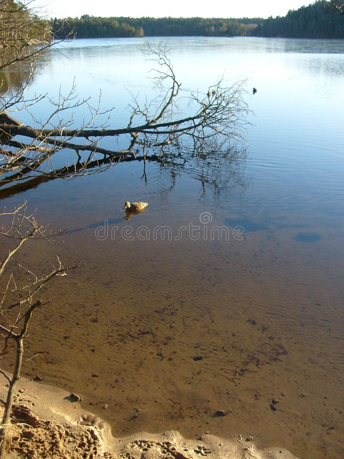 Paysage scénique de lac en Suède images libres de droits