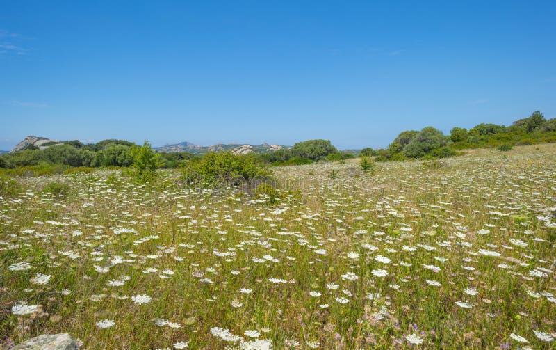 Paysage scénique des collines vertes et des montagnes rocheuses de l'île de la Sardaigne photo stock