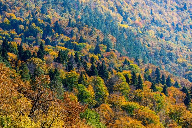 Paysage sc?nique avec des arbres dans la for?t de montagne en automne photo stock