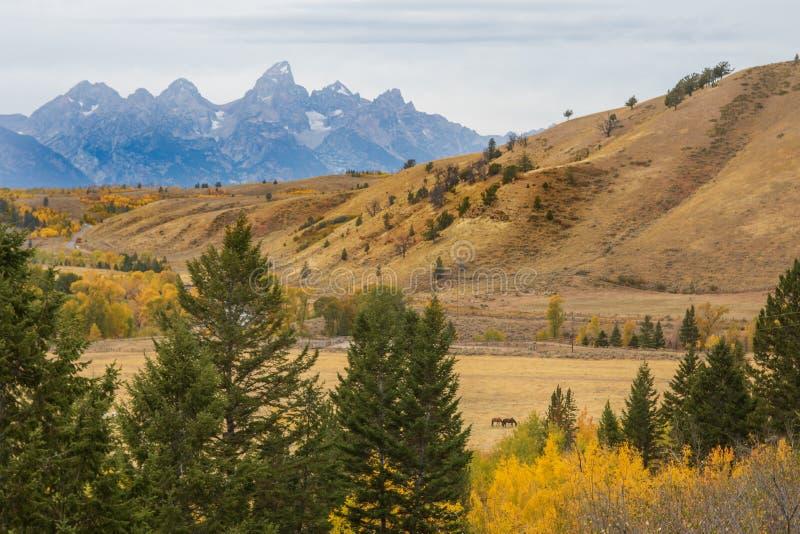 Paysage sc?nique de Teton en automne photos libres de droits