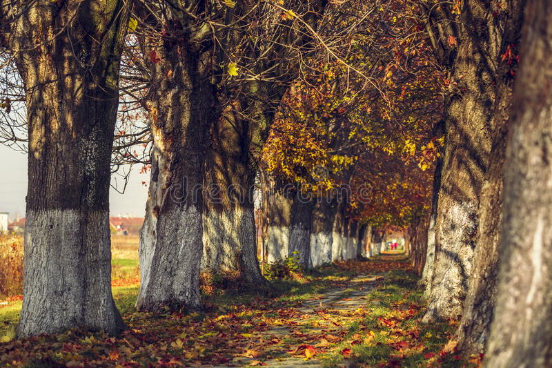 Paysage serein d'automne images stock