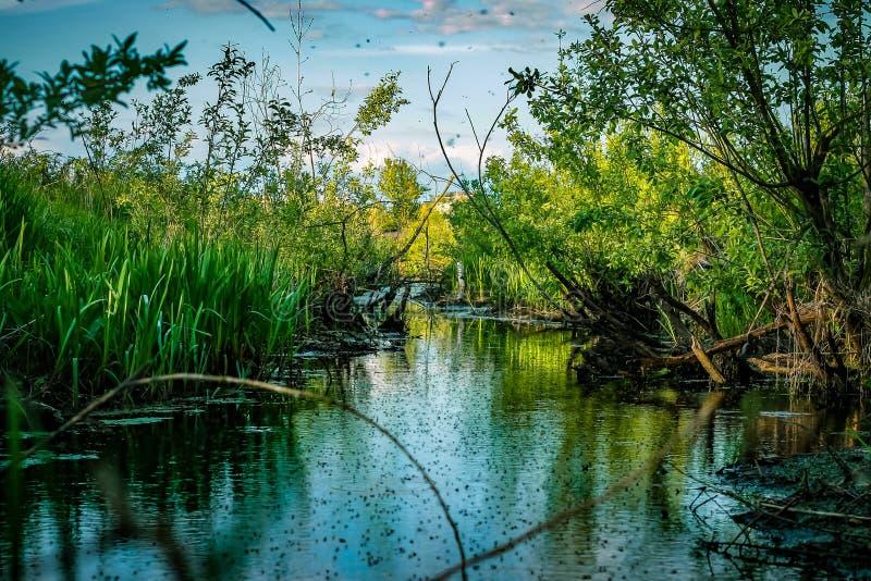 Paysage silencieux de réflexion de rivière de marais sauvage Réflexion de marais image stock