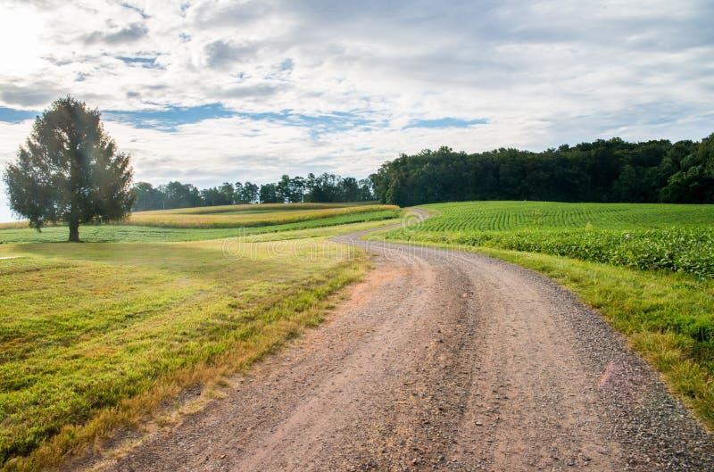 Paysage sinueux rural de rue avec l'herbe et les arbres à la ferme photos stock