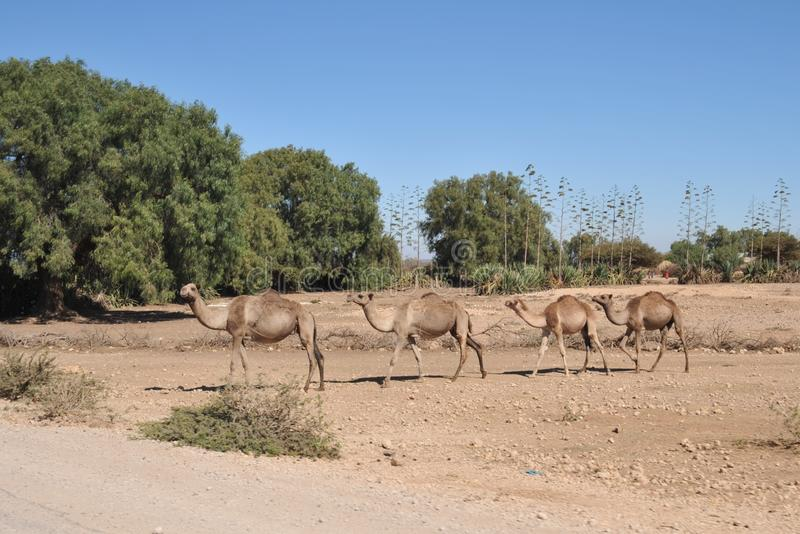 Paysage somalien photographie stock