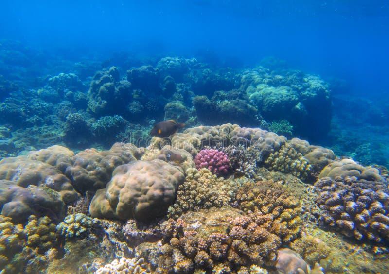 Paysage sous-marin avec le récif coralien au soleil Biosphère océanique photo libre de droits