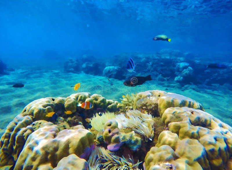 Paysage sous-marin avec le récif coralien et les poissons de corail Illustration numérique de vue sous-marine vibrante illustration de vecteur